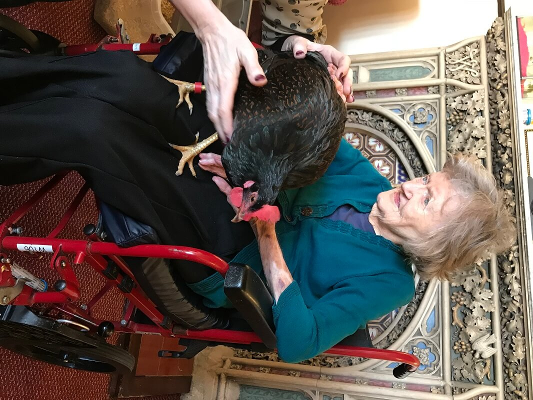Burton Closes Hall Care Home resident Doreen Maltz, 89, holds Dill, one of the chickens who visited for animal therapy