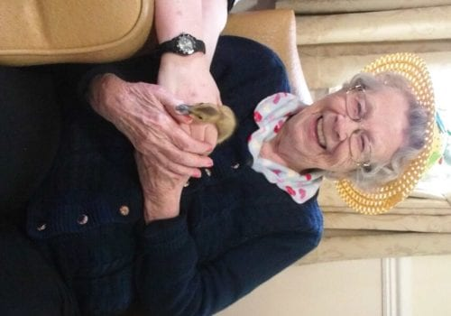 The Oaks Care Home resident Ann Wallace meets one of the newly hatched ducklings