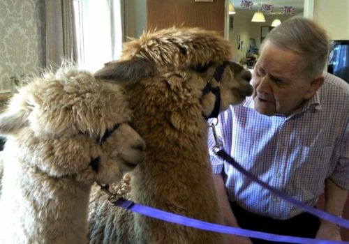 Walter Frost meets Gloria and gaynor the Alpacas