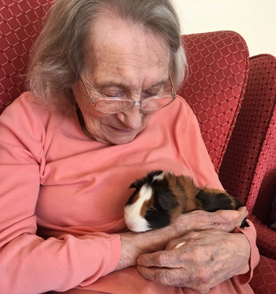 The Gables Care Home resident Joan Grey with a guinea pig from Pets at Home.