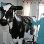 Kingsgate resident Isabella Waugh meets Bella the interactive cow