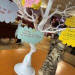 Kitten Dave and the wish tree