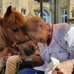 Therapy horse copper nuzzles resident Joyce Burrell